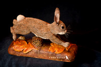 Jumping Rabbit - SOLD